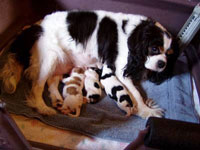 Marlee and her puppies